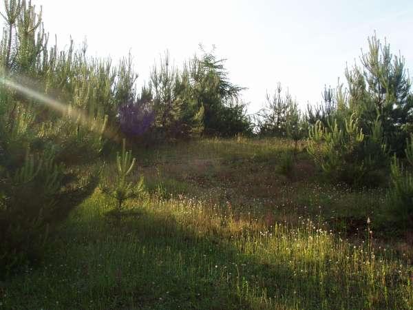 Zdjęcie 7 oferty TY783799 Koleczkowo, ul. Klonowa