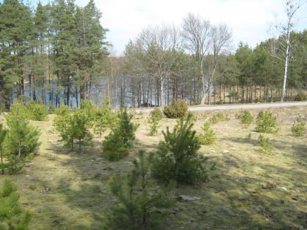 Zdjęcie 14 oferty TY064171 Borowy Młyn