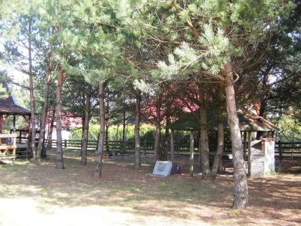 Zdjęcie 21 oferty TY064932 Bożepole Królewskie, Leśna