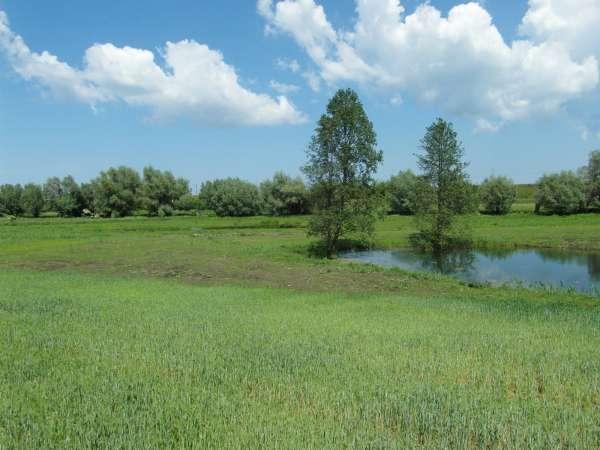 Zdjęcie 4 oferty TY177777 Kolnik, ul. Stare Wierzby