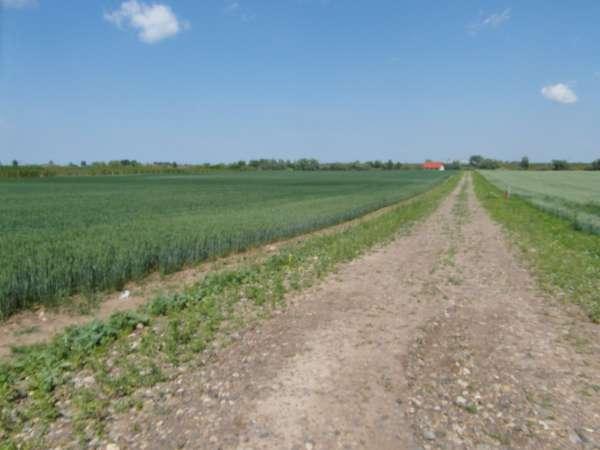 Zdjęcie 28 oferty TY177777 Kolnik, ul. Stare Wierzby
