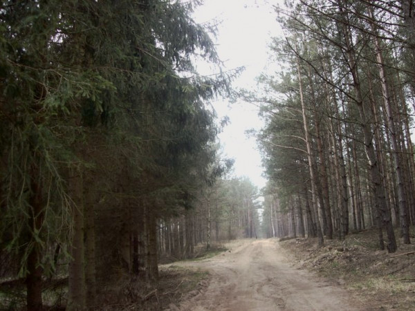 Zdjęcie 2 oferty TY065228 Stara Kiszewa