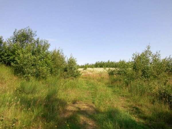 Zdjęcie 14 oferty TY065869 Miastko, ul. Długa