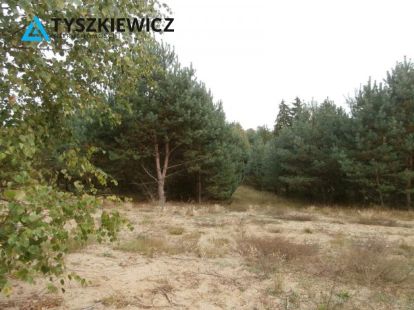 Zdjęcie 6 oferty TY071474 Brzezieński Młyn