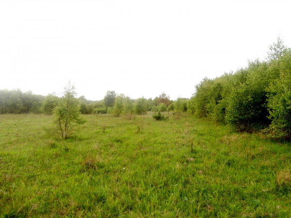 Zdjęcie 2 oferty TY540127 Miastko, ul. Koszalińska