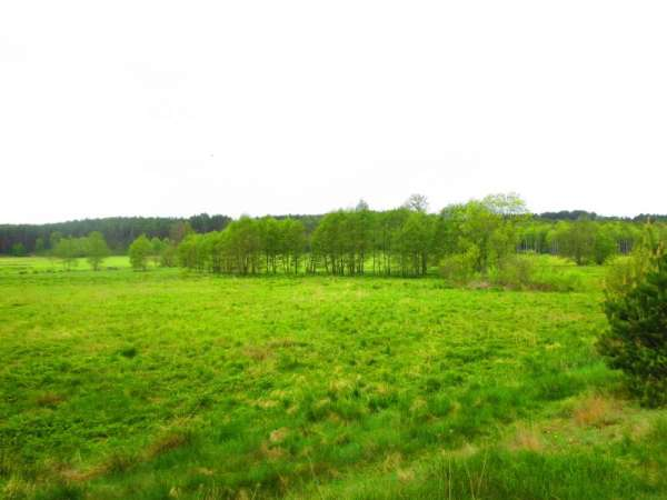 Działka siedliskowa na sprzedaż, Brusy