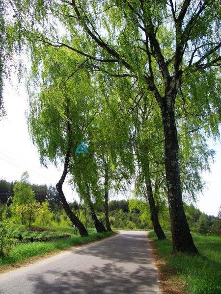 Zdjęcie 37 oferty TY062174 Dziemiany, Kalisz