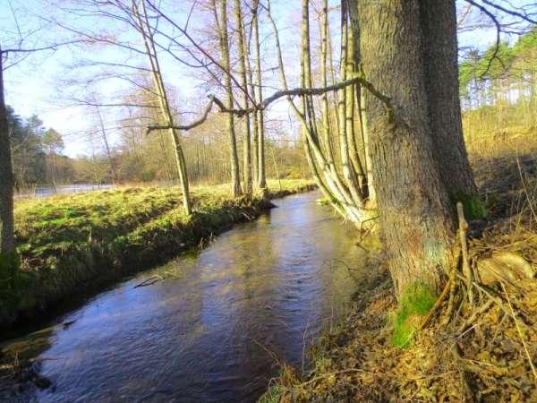 Zdjęcie 2 oferty TY062497 Borowy Młyn