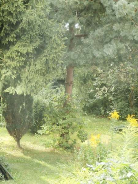 Zdjęcie 4 oferty TY063130 Wejherowo, ul. Jana Kochanowskiego