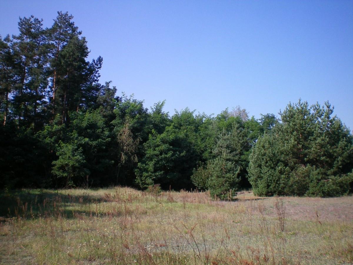 Stromiec