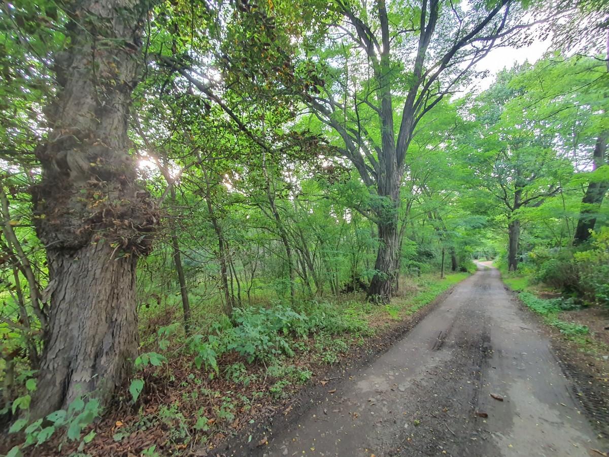 Stare Skoszewy