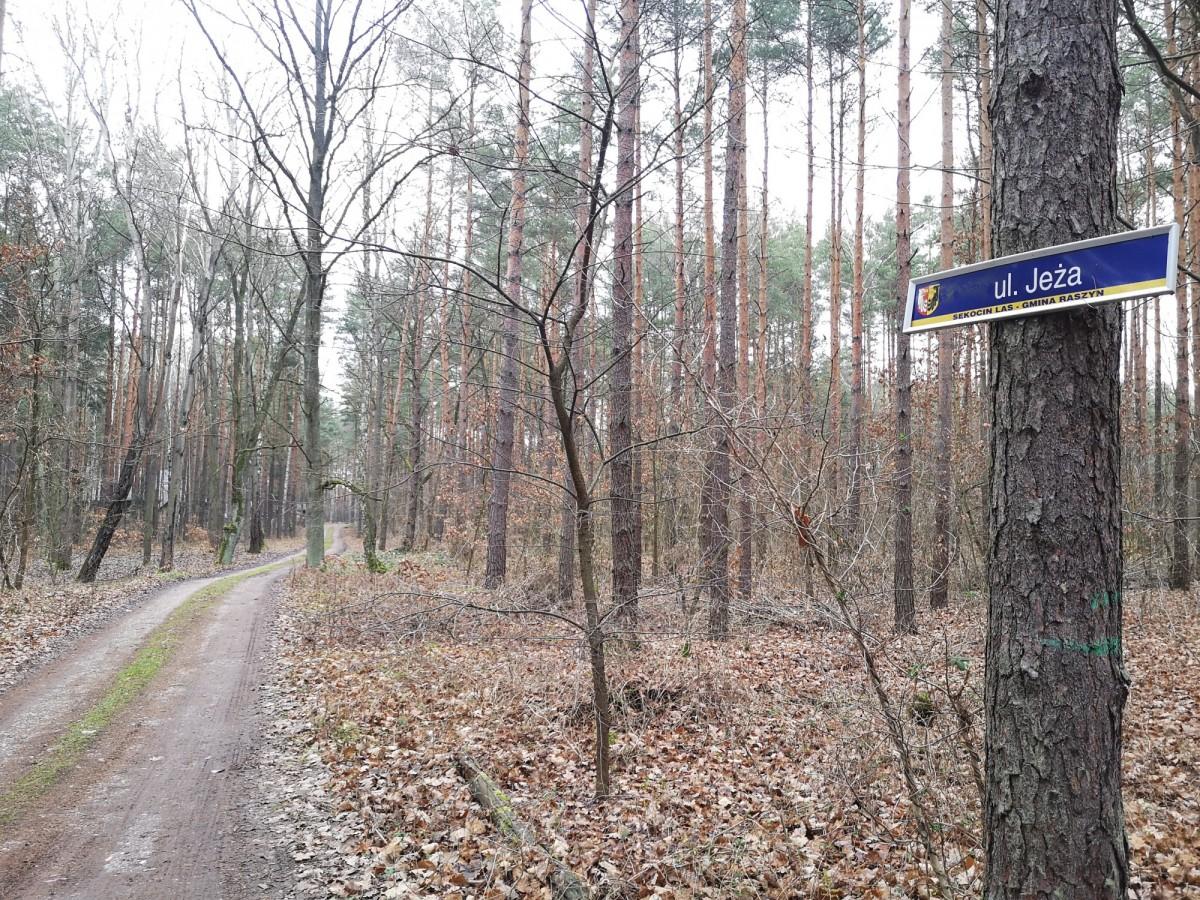 Sękocin-Las Jeża